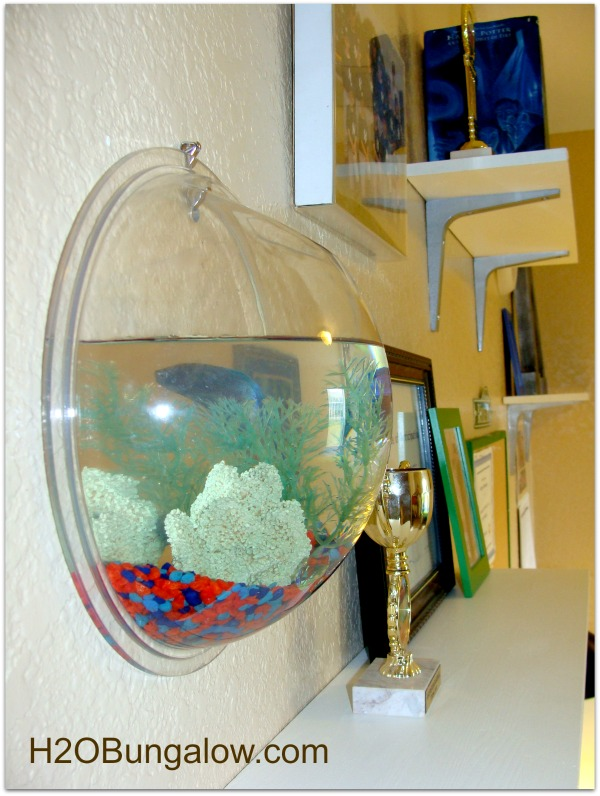 tween makeover fishbowl