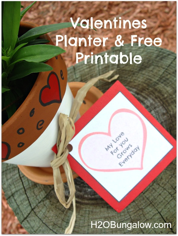 Valentines Plant Gift With Free Sentiment Printable