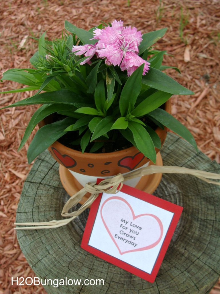 Valentines plant gift with free cute card