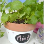 Labeled Herb Planters