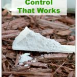 Diatomaceous Earth For Organic Pest Control