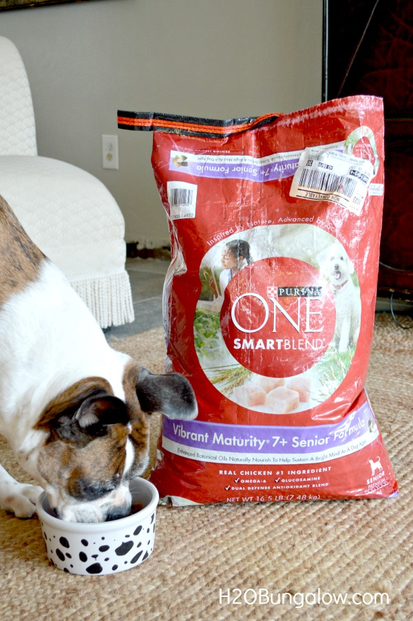 Purina-One-28-Day-Challenge-Senior-H2OBungalow