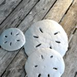 Concrete Silver Sand Dollars