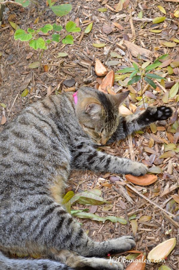 Hemmingway cat H2OBungalow