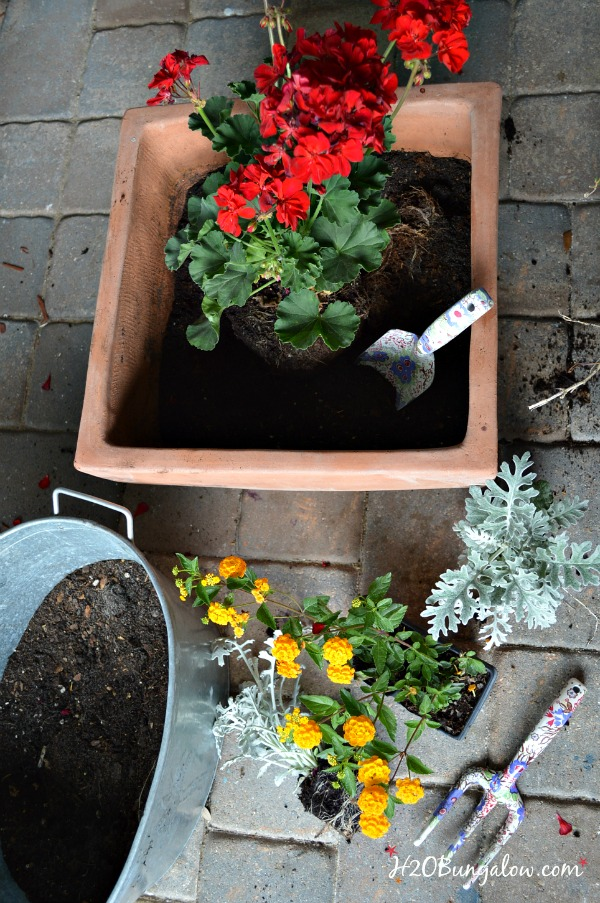 5 tips for beautifu mixed planters that grow and look healthy all season long - H2OBungalow.com #gardening #mixedplanters #flowers