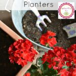 5 Tips for Beautiful Mixed Planters