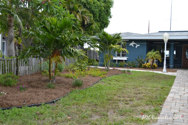 DIY budget landscaping with florida  native and butterfly friendly plants -Home improvement tutorial H2OBungalow