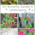 DIY Butterfly Garden Landscaping Part 1