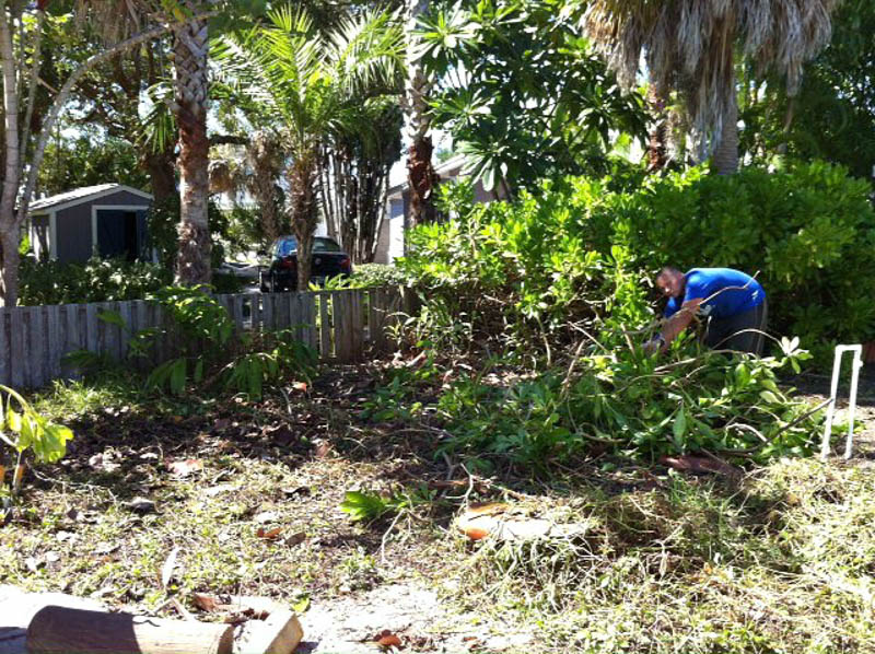 cleaning up overgrown landscaping