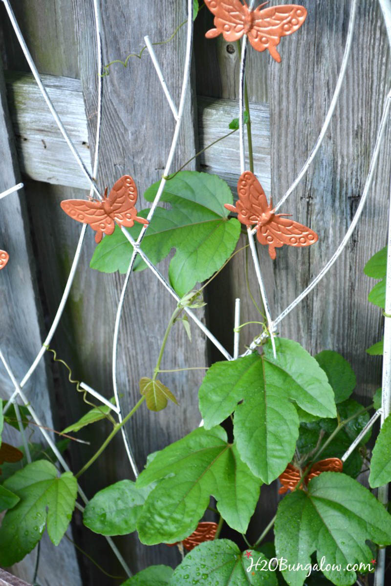 flower vine growing on a fence