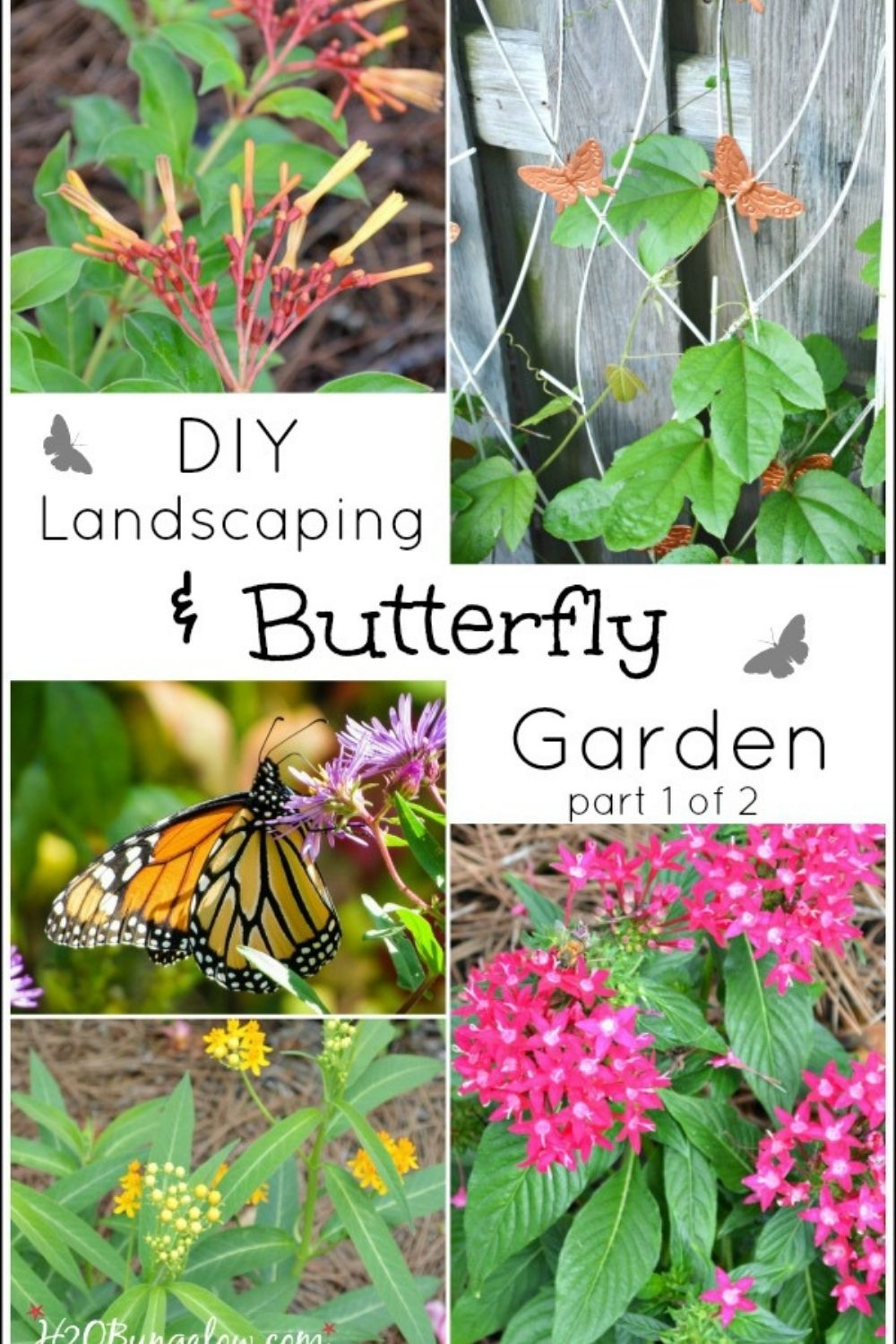 image collage of butterfly garden with text overlay