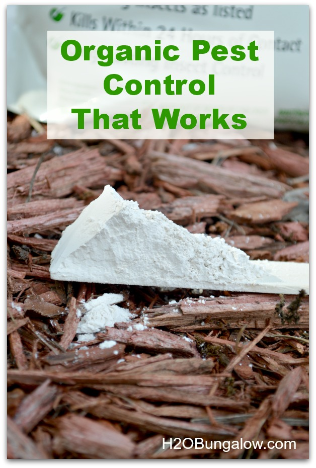 Diatomaceous earth organic pest control that works and 9 more Earth Friendly DIYs for Earth Day H2OBungalow