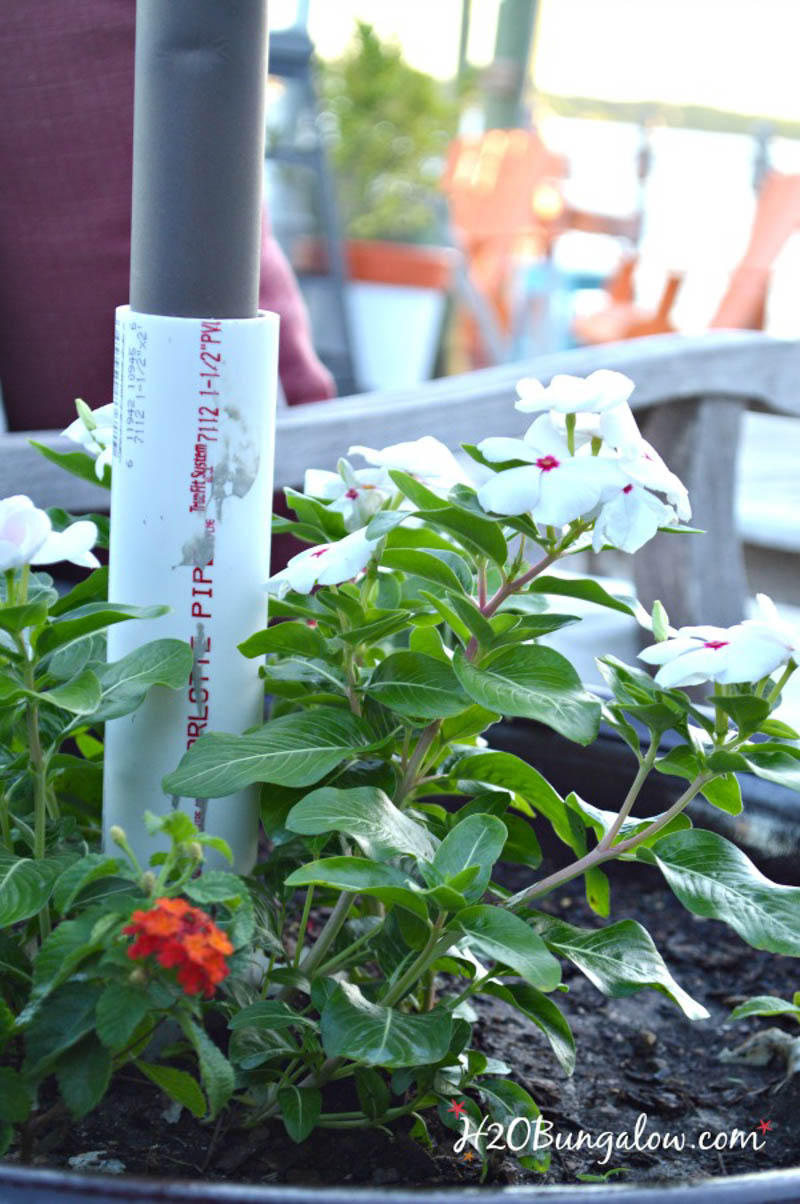 close up of umbrella plant stand