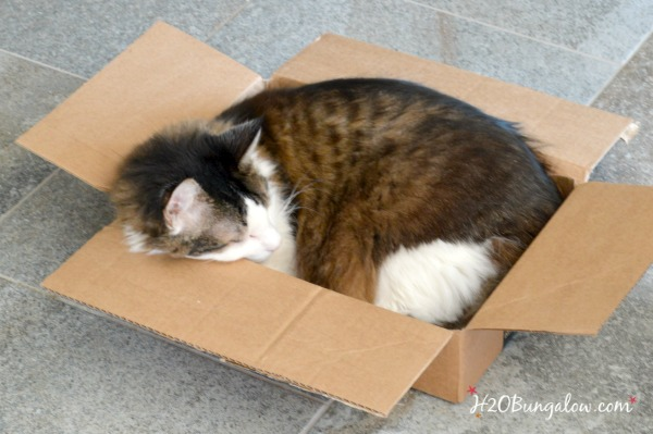 Soup-can-sam-DIY-Cat-Bed-H2OBungalow