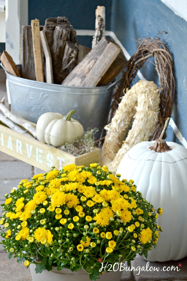 close up of yellow mums and white pumpkin