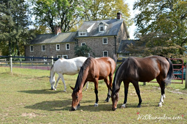 horses-and-stone-farmhouse-h2obungalow