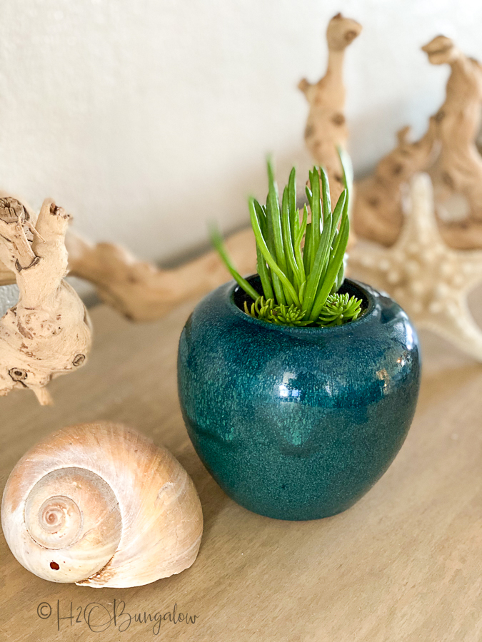 tall plant in ceramic container drilled to make a planter