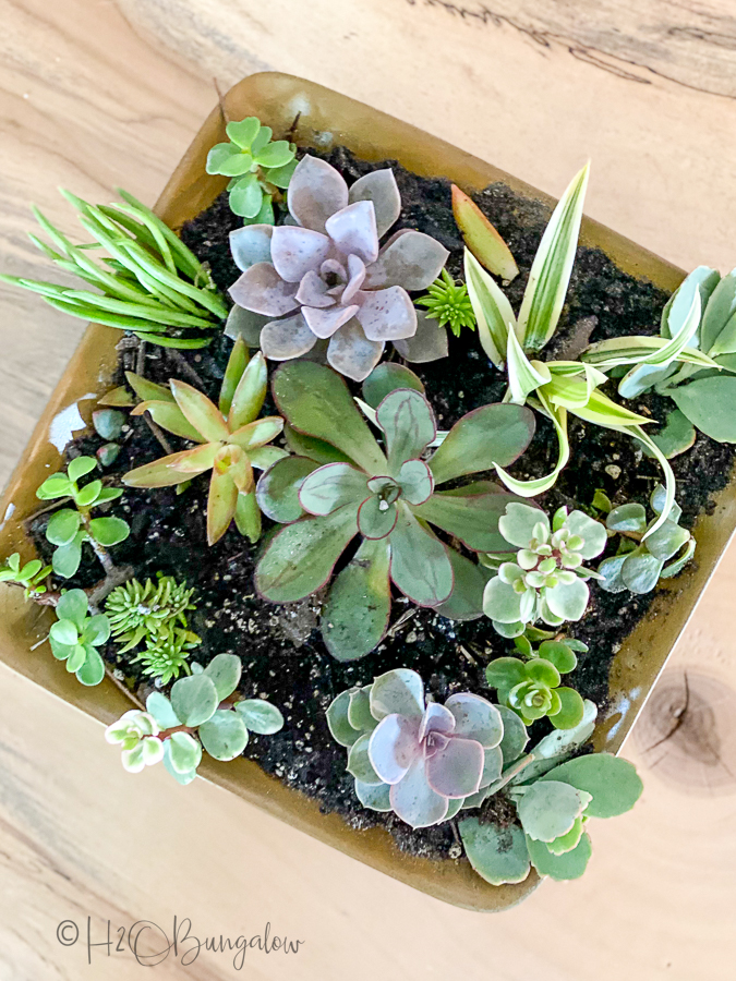 plants in DIY planter