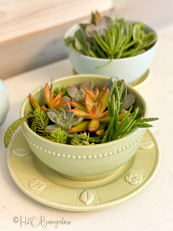 drilled drain holes in ceramic bowl with plants