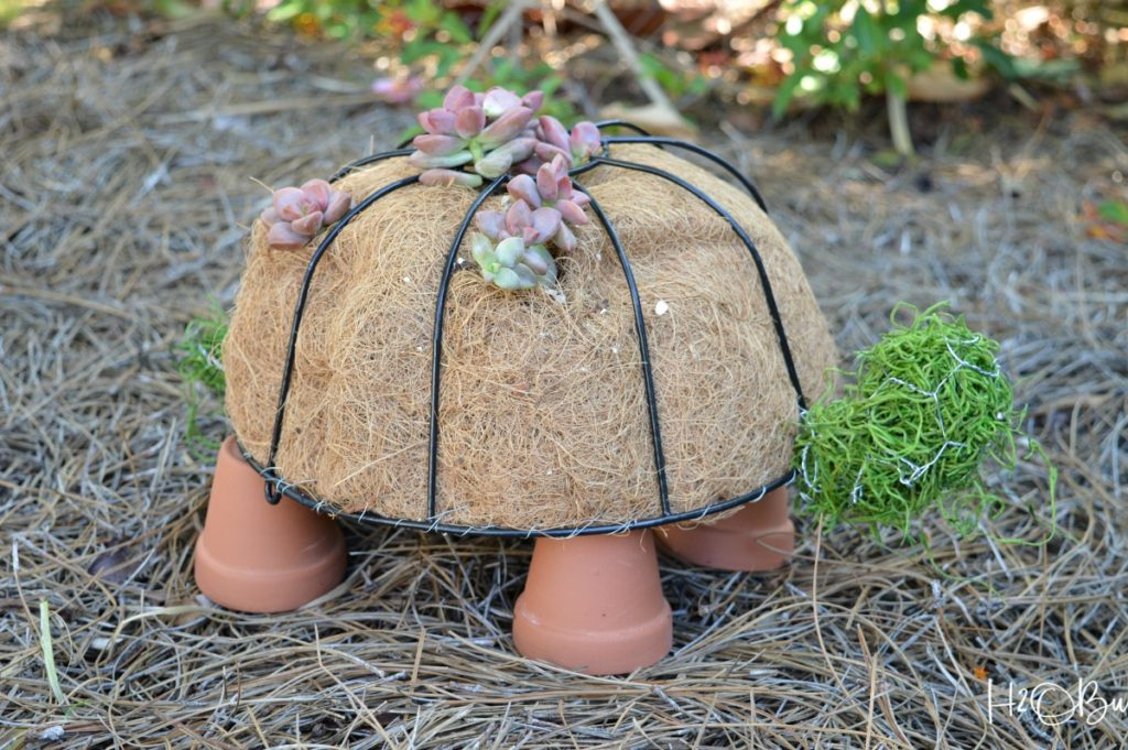 close up of turtle topiary with clay pot feet and succulents planted in it