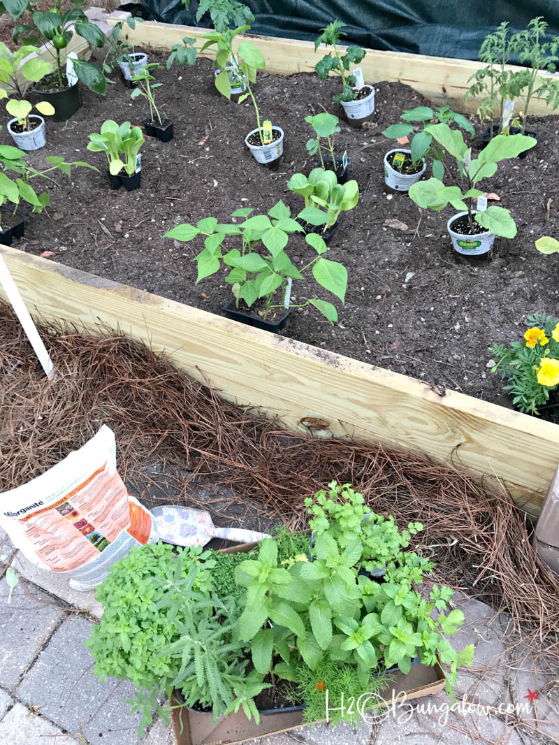 raised garden bed with plants in containers to determine layout