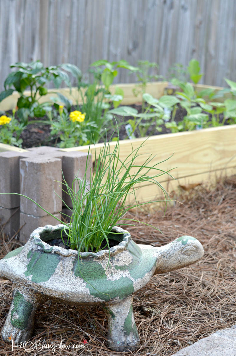 turtle planter in front of raised garden bed