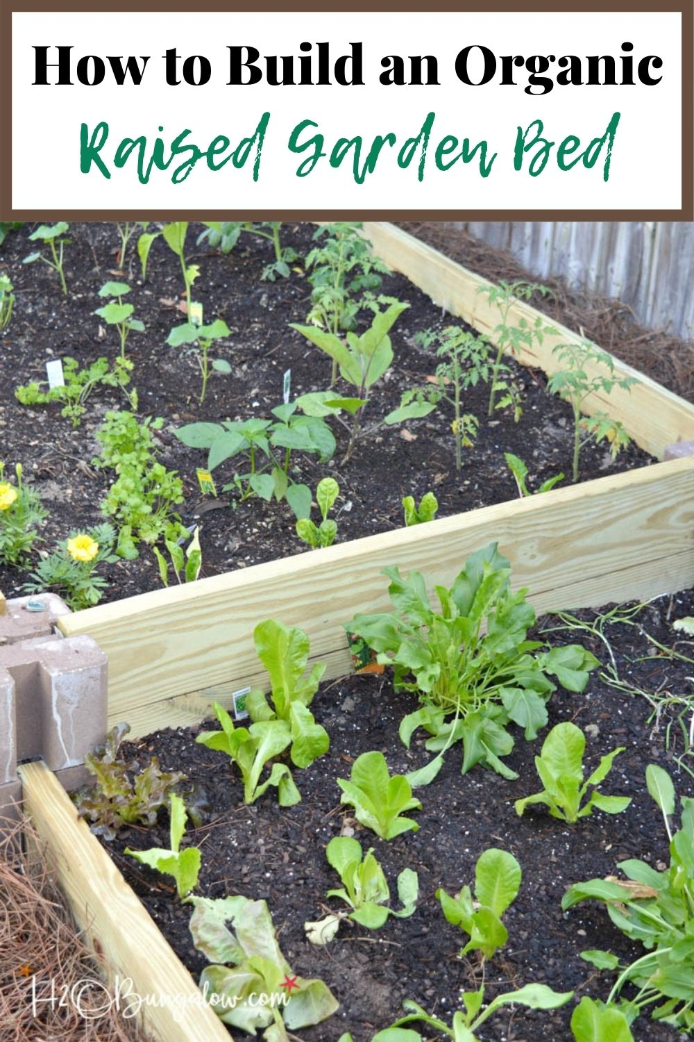 raised garden beds with plants and text overlay