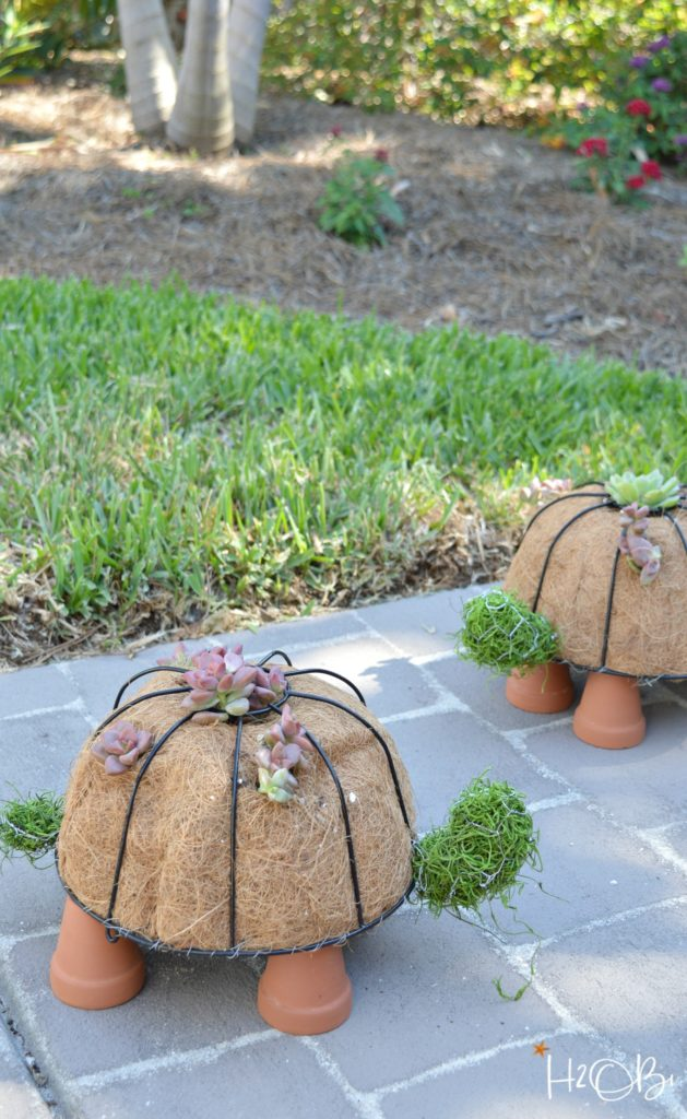 Turtle topiary on stone walkway with succulents planted in it