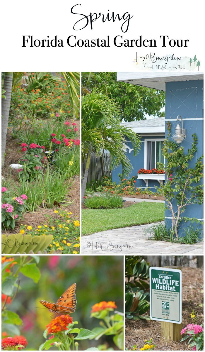 Welcome to the H2OBungalow Florida Spring Garden Tour. Spring has been brutal this year around the country, but not here on the west coast of Florida. My butterfly garden is full of monarch butterflies, flowers and lush greenery. Our Florida late spring garden is a lot like a summer garden elsewhere in the country.
