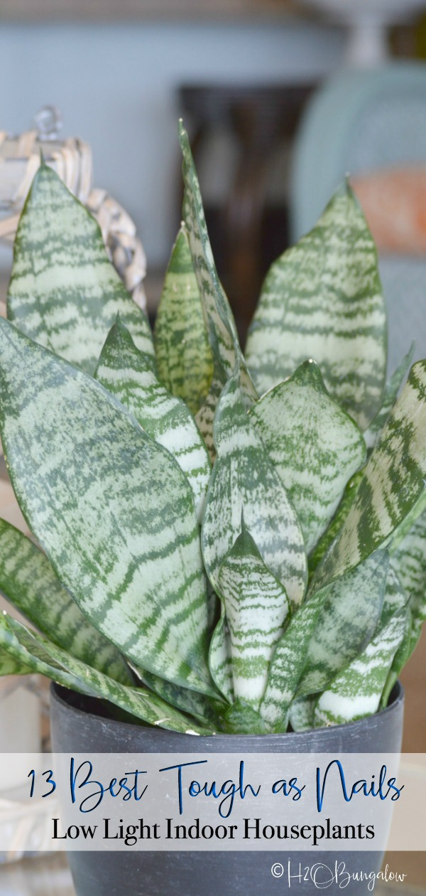 13 Tough Low Light Indoor Plants - H2OBungalow on low desert plants, low garden plants, low growing plants for front of house, low floral plants, low mountain plants, low water plants, low sun plants, low light plants, low butterfly plants, low light palm trees,