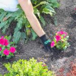 landscape bed design tips for planting patio garden beds