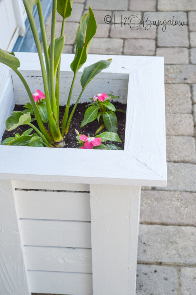 Wooden Planter Box built with free plans